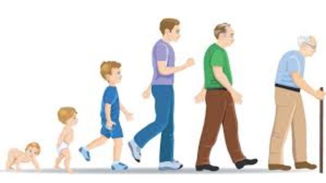 Asegúrese De Que El Cuerpo Funcione Perfectamente Desde El Nacimiento Hasta La Vejez